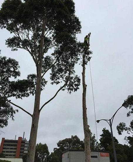 Specialised Tree Climbing