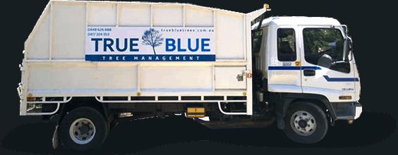 True Blueturck